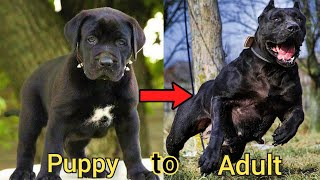 i'm a big kid now - Dog change from infancy to adulthood #34