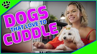 Top 10 Awessome Dogs That Love To Cuddle  TopTenz