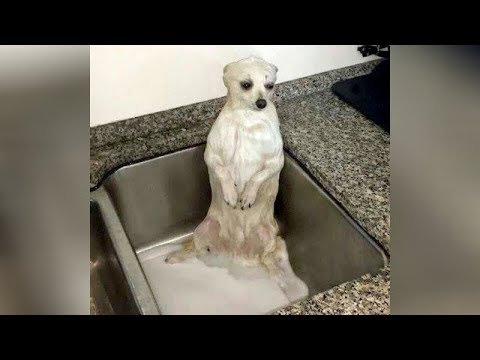 FUNNY DOGS are here, BE READY TO DIE FROM LAUGHING! – So SUPER FUNNY DOG videos