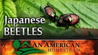 Japanese Beetle Attack On Your Garden! Will You Survive?