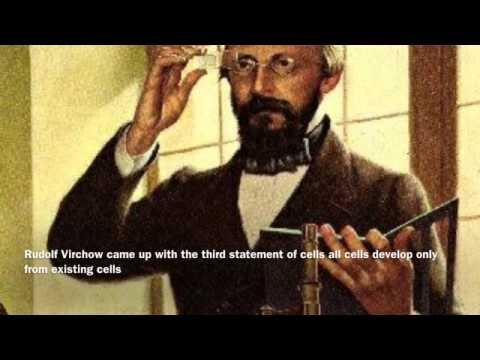 Cell Theory rudolf Virchow