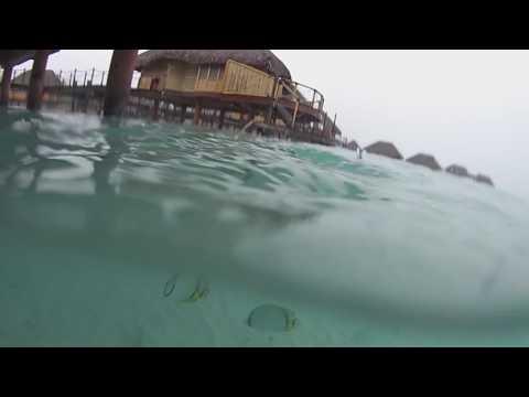 Bora Bora, French Polynesia - Feeding the Fish Underwater View HD (2017)