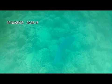 20180523 093616 swim through