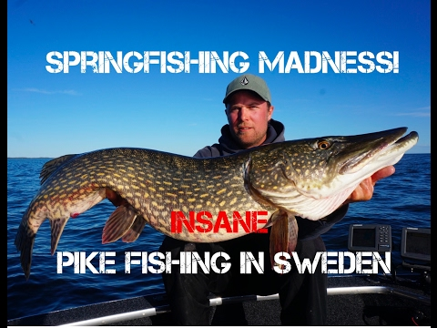 Spring Fishing Madness! Insane Pike Fishing in Sweden