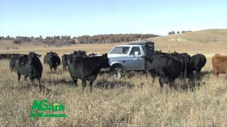 AGam in KS - Sustainability from Cattle Feeding Perspective - June 2, 2016