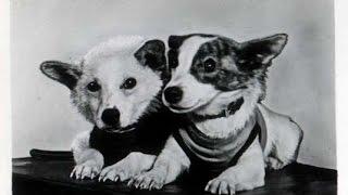 Белка и Стрелка. История преданности собак.