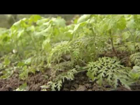 jardinage naturel les engrais pour enrichir le sol et nourrir les plantes youtube. Black Bedroom Furniture Sets. Home Design Ideas