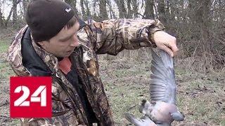 В Краснодарском крае ищут причину падежа диких птиц - Россия 24