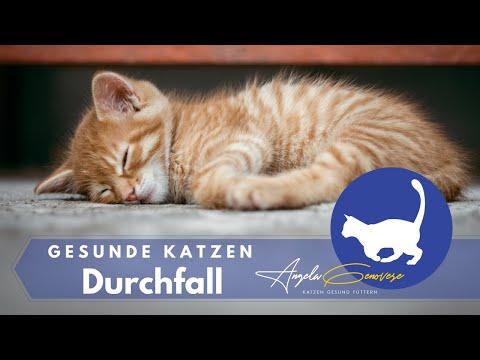 Durchfall Bei Katzen - Was Tun?