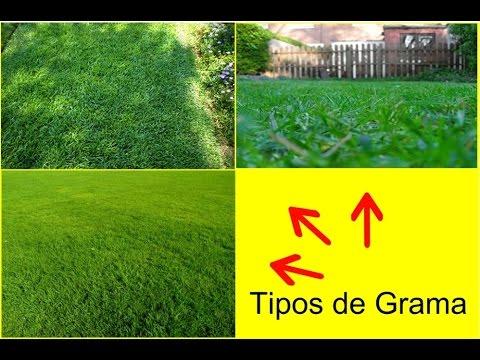 Tipos de grama para jardim youtube for Tipos de cesped natural para jardin