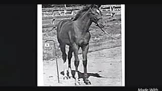 Секретариат!Лошадь легенда!