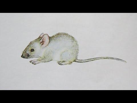 Сказка о глупом мышонке Маршак, добрый мультик для малышей