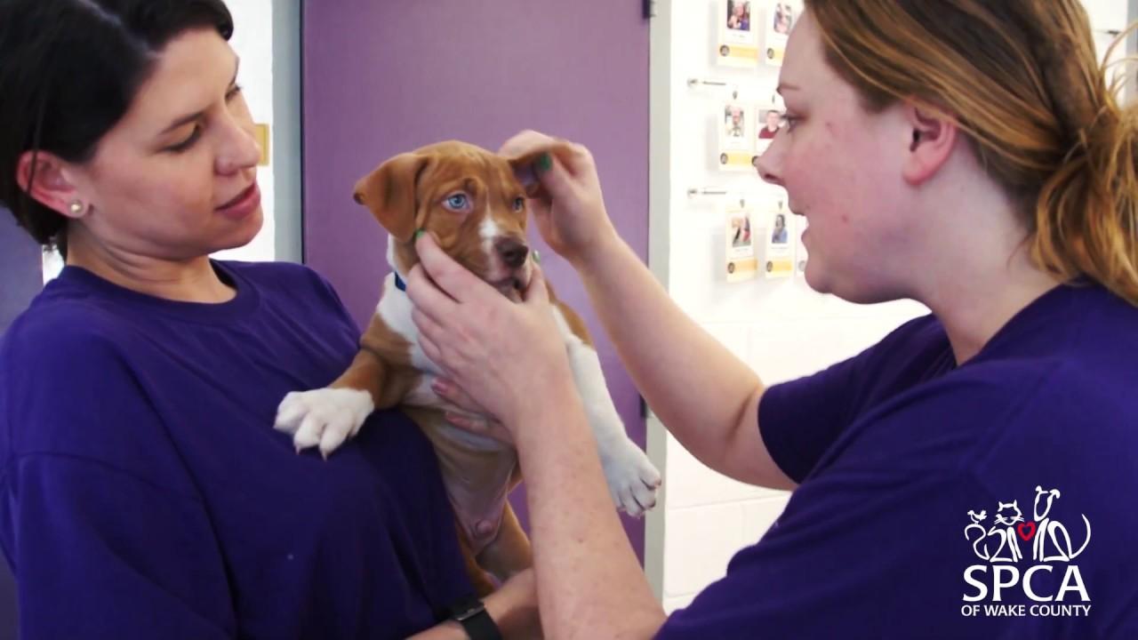 Creating a Humane Community - SPCA of Wake County