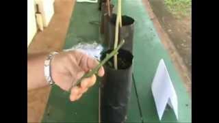 Repeat youtube video Instruções para enxertia de Citros (Borbulhia T Invertido) - ESALQ/USP