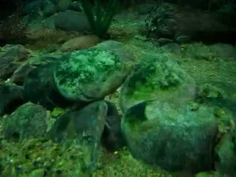 African fish tank 10 000 gal with dwarf crocodiles by for 10000 gallon fish tank