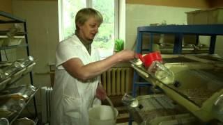 Как породистые крысы, собаки и кролики тестируют белорусские лекарства и косметику