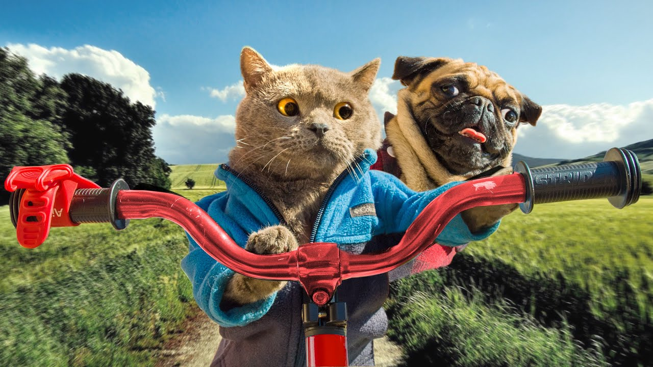 Download Cat and Dog Road Trip