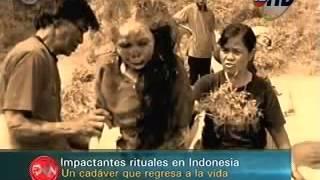 xác chết biết đi do người dân Toraja làm
