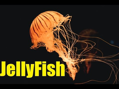Top 10 AMAZING Facts About Jellyfish | Jellyfish Sting | 2017 | TheCoolFactShow EP17