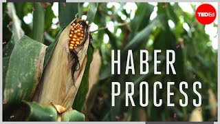 The Haber process - Daniel D. Dulek