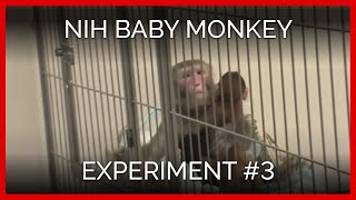 'Novel Cage' Tests | NIH Baby Monkey Experiment #3