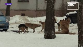 Бродячие собаки в Дубне: нашлись защитники