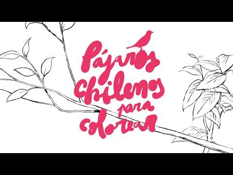 Pájaros chilenos para colorear - YouTube