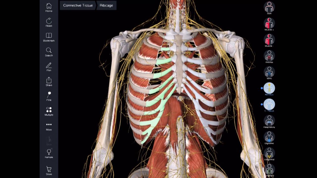 ScHARR App Hack - Essential Anatomy
