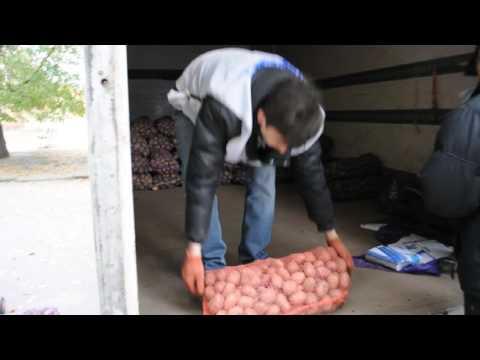Наш картофельный край часть 2