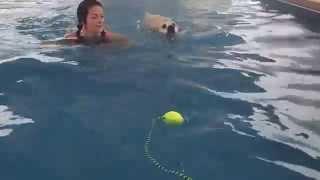 Labrador Retriever Beagle Mix Ajax Swims With His Mom