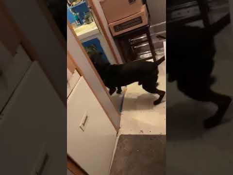 Bryan Quarrals get fuck by a dog