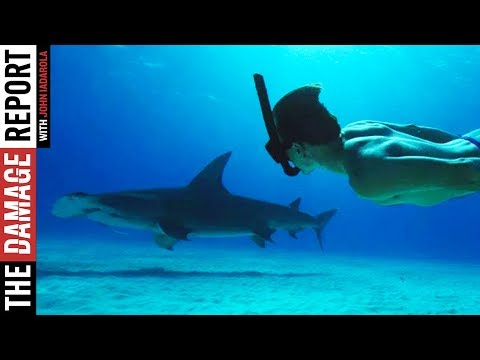 Sharkwater Extinction Will SHOCK You