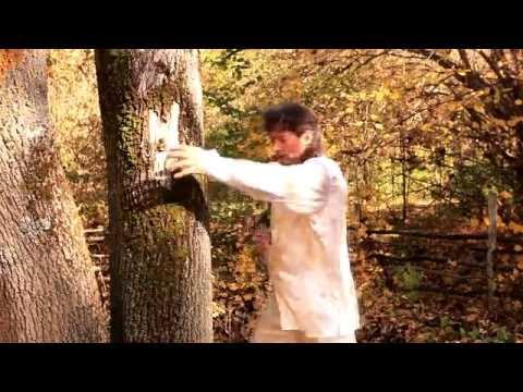 Сергей Синельников художник. Тай-чи в лесу