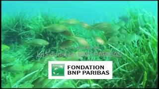Acidification des océans : le pari de l'équipe eFOCE