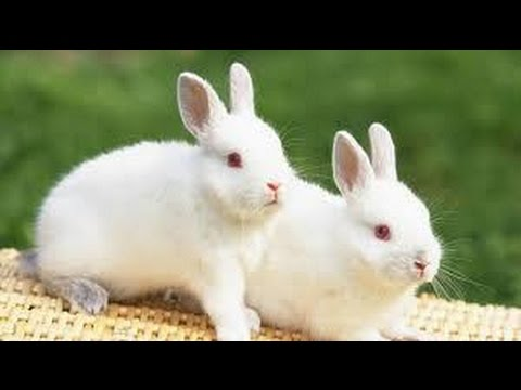 Brown And White Rabbit And Baby Bunny Wonderful Pictures