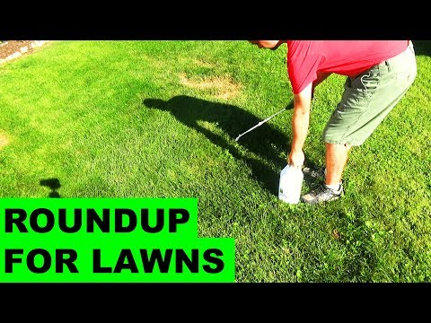 Roundup For Lawns Before & After Review