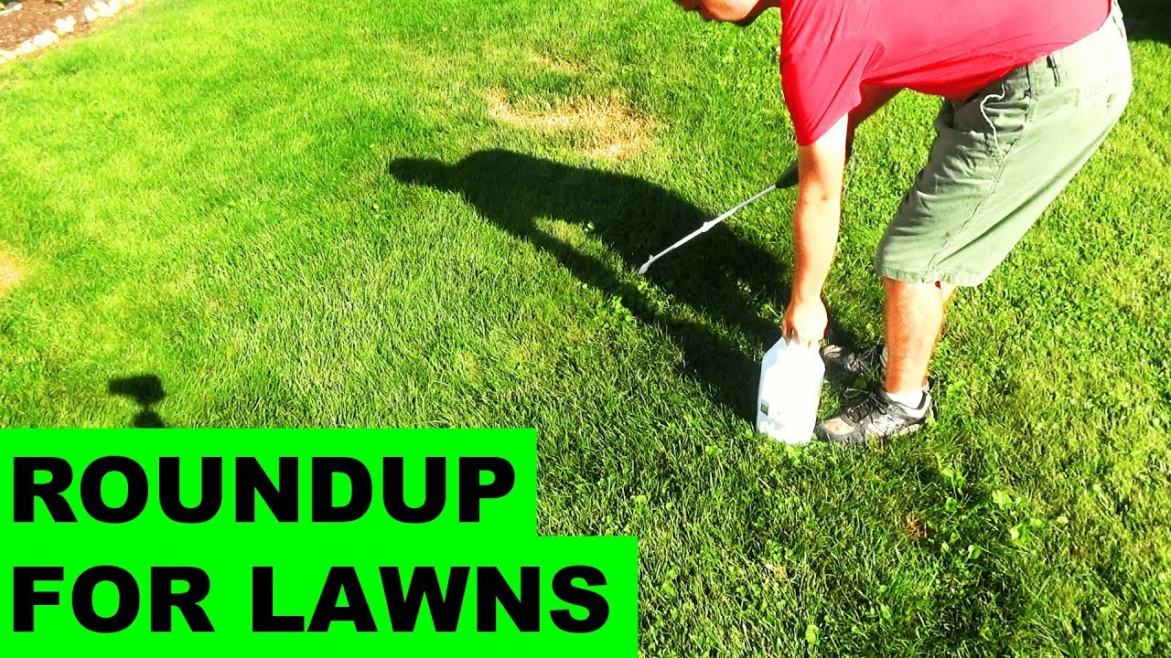 Roundup For Lawns Before After Review