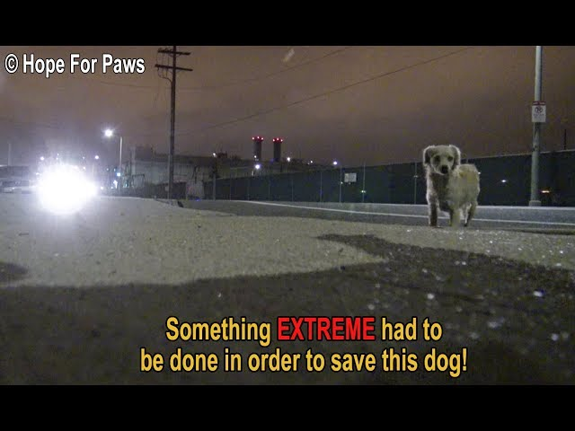 Something EXTREME had to be done in order to save this homeless dog.  DON'T BLINK or you'll miss it!