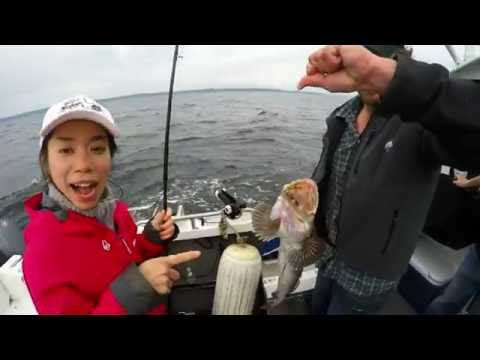 Lingcod Fishing in Puget Sound, WA / キバアイナメ釣り in アメリカ・ワシントン州