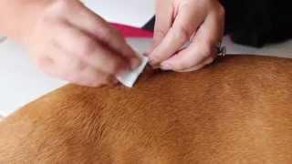 Vet Seal: Our Dog Butter
