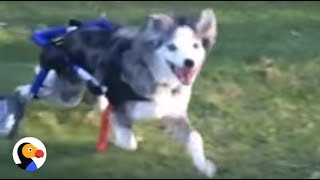 AMAZING Dog in Wheelchair Will Inspire You | The Dodo
