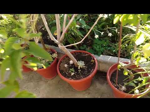 Никогда не сажайте эти растения на своем участке. Алина хозяйка.