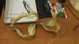 60 Фламберги и зубы акул