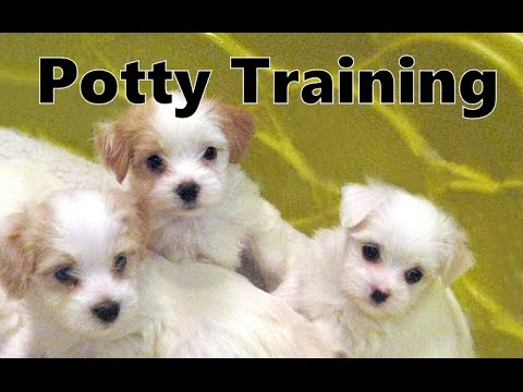 Potty training puppy apartment coupon