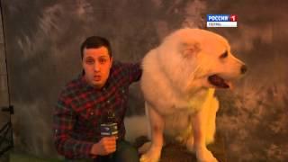 В Перми выступает одно из лучших цирковых шоу в России