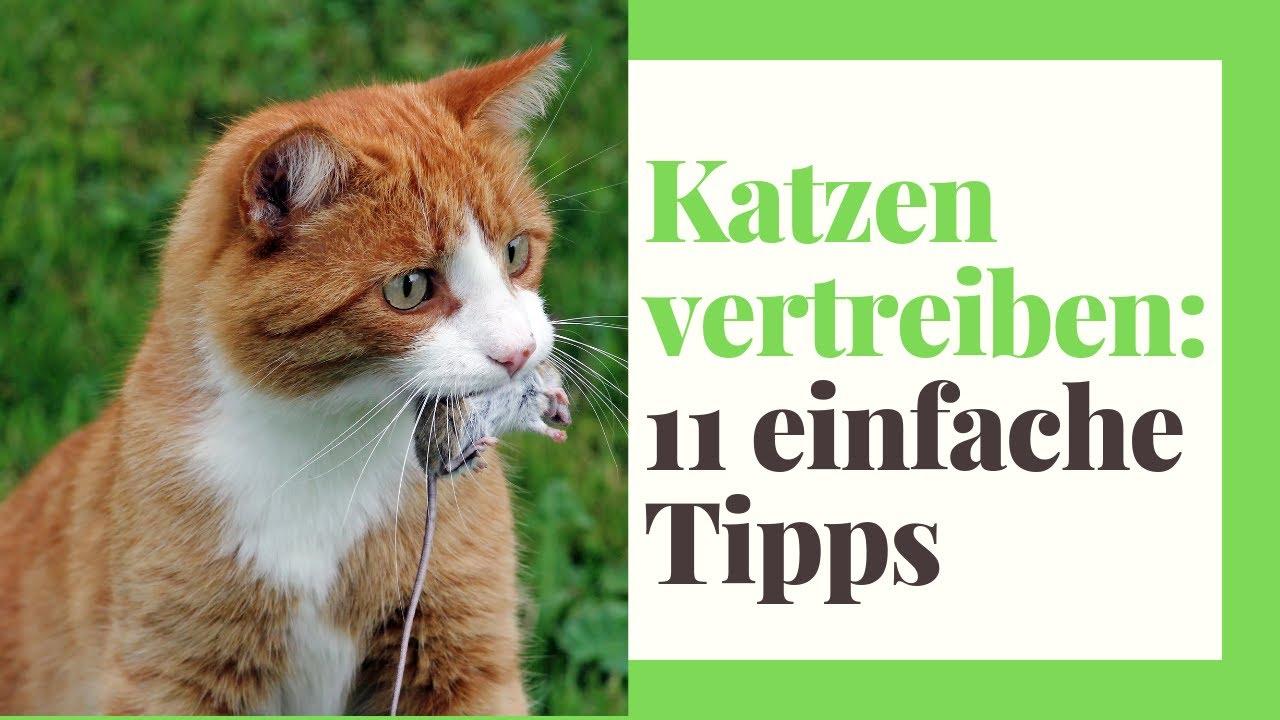 Katzenabwehr Katzenvertreiber Katzenschreck gegen Katzen-Frei Vergrämung Mittel