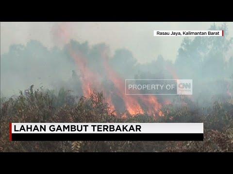 Lahan Gambut Terbakar di Kalimantan Barat