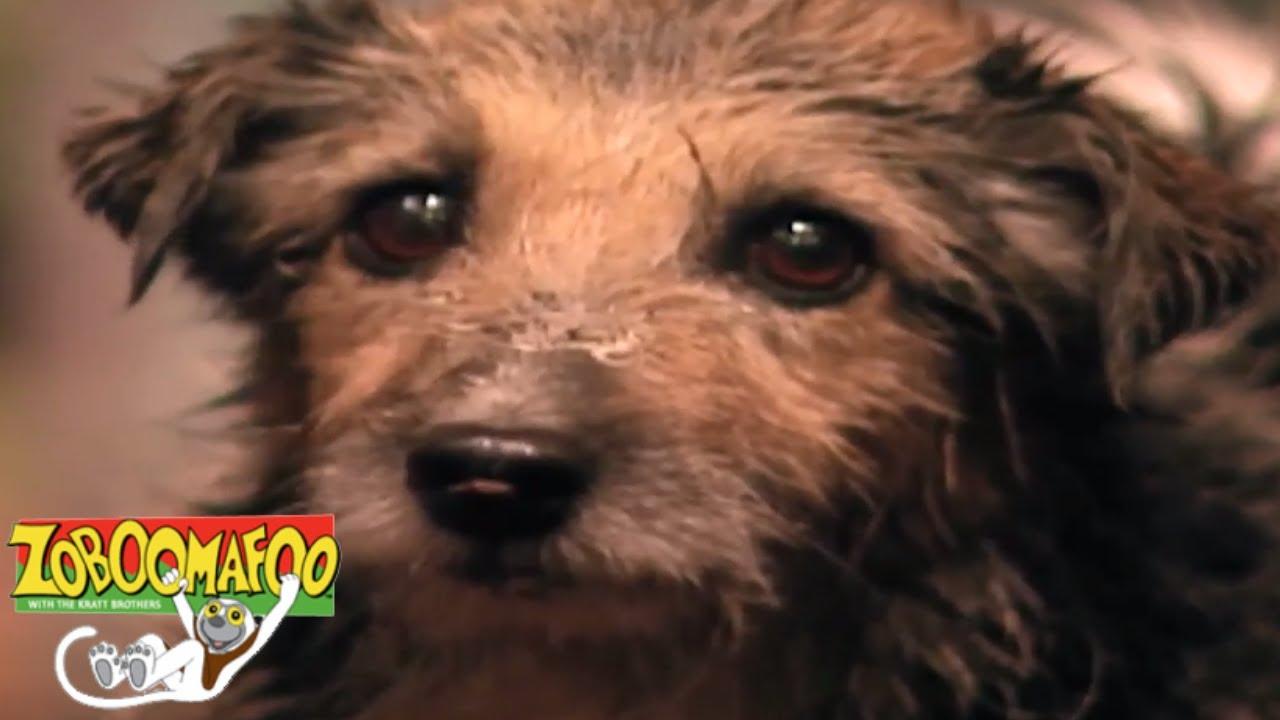 Zoboomafoo 129 - Bathtime | HD | Full Episode - Video - ViLOOK