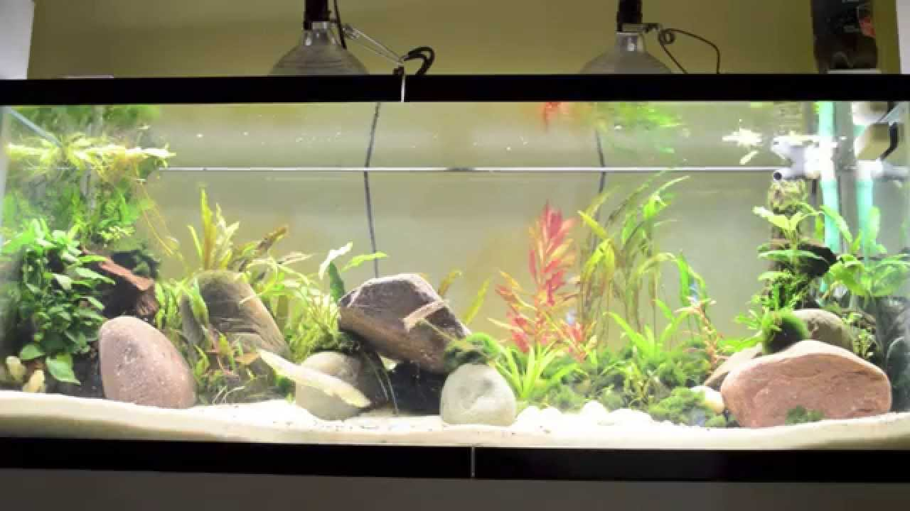 4ft Led Shop Light >> Best Lights for Planted Tank - YouTube