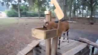 Diy Goat Milking Stand Using Free Wood Pallets